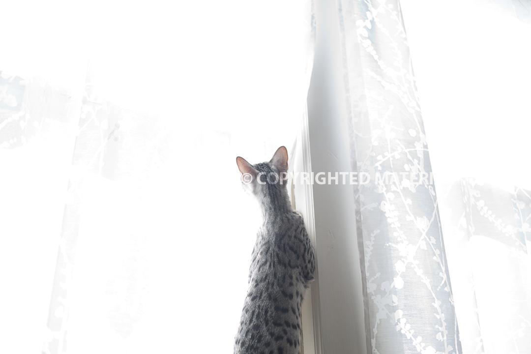AAJA_Chen_Cat